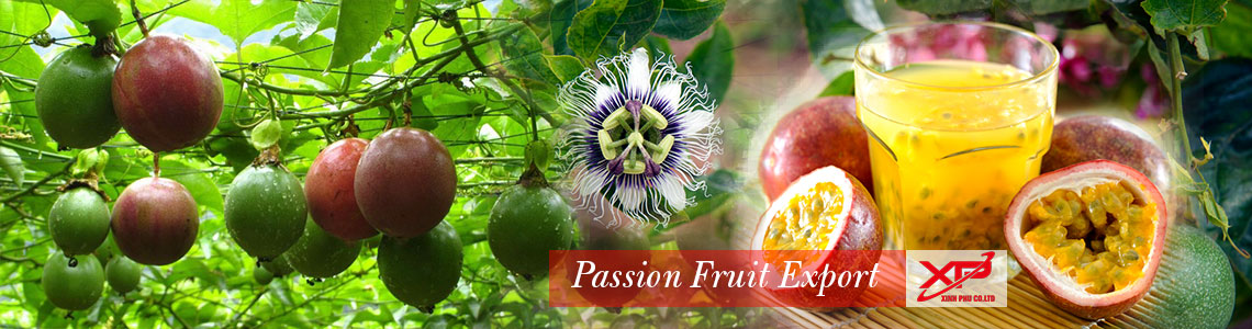 passion fruit export from Xinh Phu  Co.,