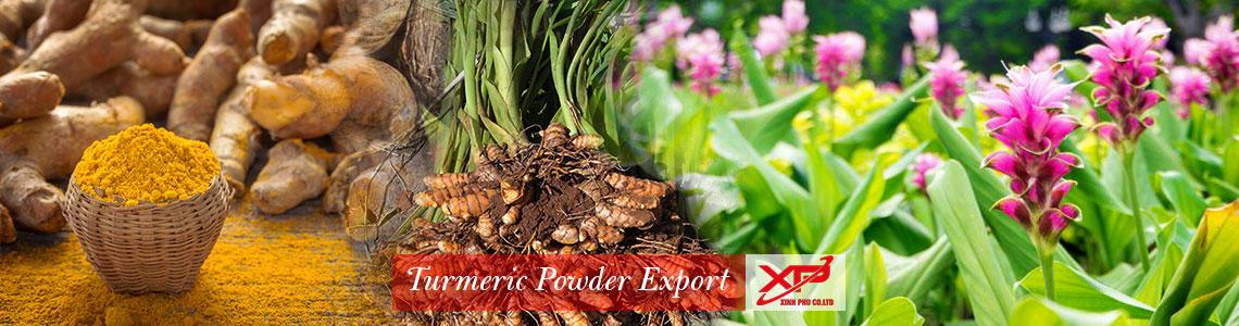 Turmeric powder export from Xinh Phu  Co.,